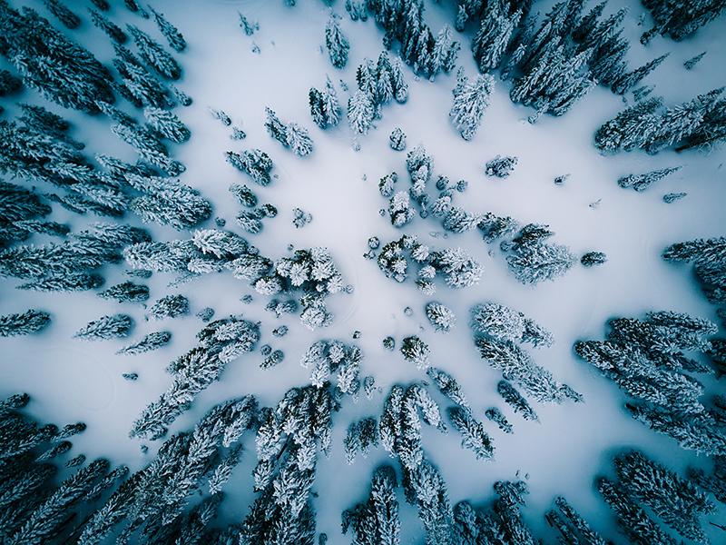 winter woods photo