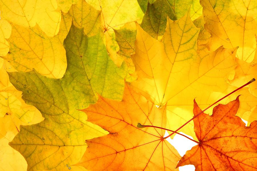 colourful fall leaves